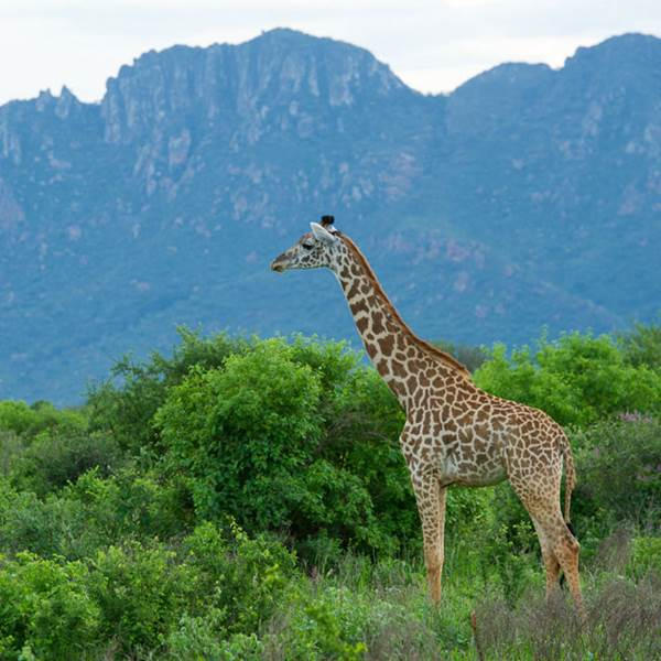 Tsavo East - Tsavo West